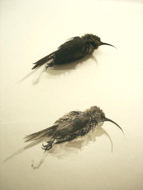 baby-sunbird-2009